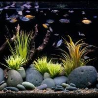 Dekoratyviniai-akvariumai_2_Akvariumusodai.lt_.jpg