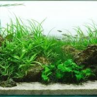 Augaliniai-akvariumai_2_Akvariumusodai.lt_.jpg