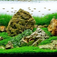 Augaliniai-akvariumai_Akvariumusodai.lt_.jpg
