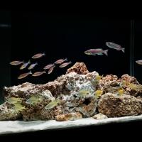 Kieto-dekoro-akvariumu-irengimas1.jpg