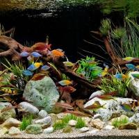 Dekoratyviniai-akvariumai_1_Akvariumusodai.lt_.jpg