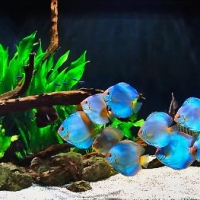 Augaliniai-akvariumai_3_Akvariumusodai.lt_.jpg