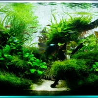 Augaliniai-akvariumai_4_Akvariumusodai.lt_.jpg