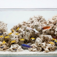 Kieto-dekoro-akvariumai_2_Akvariumusodai.lt_.jpg