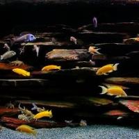Kieto-dekoro-akvariumai_3_Akvariumusodai.lt_.jpg