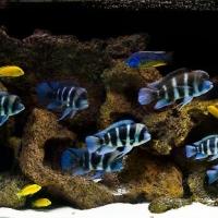 Kieto-dekoro-akvariumai_5_Akvariumusodai.lt_.jpg